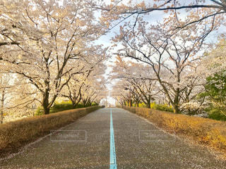 桜,長野県,松本空港,2018/04