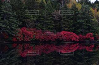 自然の写真・画像素材[2573488]