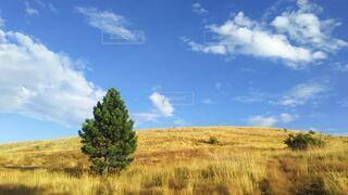 青空と丘と草原と木の写真・画像素材[4098663]