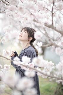 桜の写真・画像素材[4321063]