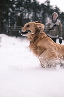 初めての雪遊びの写真・画像素材[4098472]