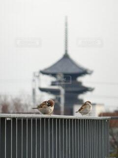 『 都の朝・・・憩う夫婦雀 』の写真・画像素材[4120277]