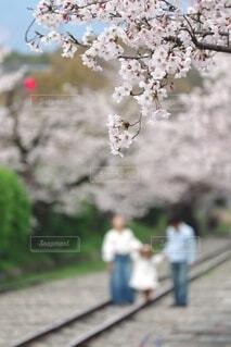 桜が見守る幸せロードの写真・画像素材[4213764]