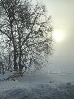 冷たい木の写真・画像素材[4136789]