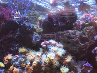 海中の写真・画像素材[4118279]