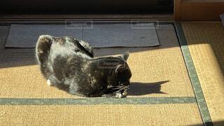 猫,動物,屋内,影,床,畳,日向