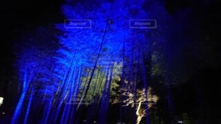 夜,綺麗,幻想的,イルミネーション,ライトアップ,竹,明るい,blue,イルミ,群馬フラワーパーク