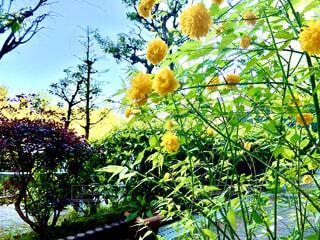 道脇に咲く花の写真・画像素材[4328151]
