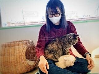 女性の膝の上でくつろぐ二匹の猫の写真・画像素材[4161951]