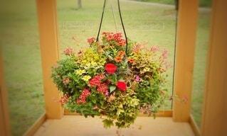 春のカラフルなお花の写真・画像素材[4166737]
