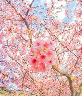 """""""春""""よ来いの写真・画像素材[4127098]"""