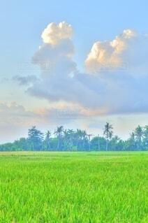 背景に木々のある大きな緑のフィールドの写真・画像素材[4150231]