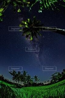 森の中の緑の植物の写真・画像素材[4150246]