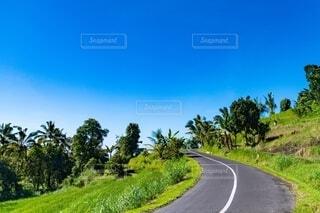 道路の脇に木がある道の写真・画像素材[4150259]