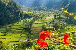 バリ島の田園風景の写真・画像素材[4150263]