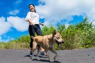 犬をひもで歩いている人の写真・画像素材[4159849]