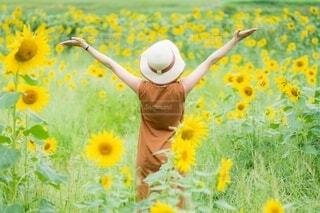 ひまわり畑に手を広げて立つ女性の写真・画像素材[4663857]