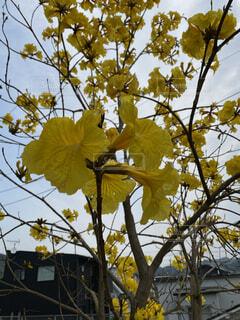 空,秋,屋外,黄色,樹木,草木,カエデ