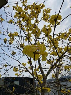 空,花,秋,屋外,葉,樹木