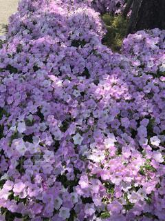 花,緑,紫,草木,ガーデン,フローラ