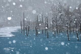 北海道美瑛町青い池の雪景の写真・画像素材[4198819]