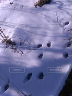 ゆきの中の足あとの写真・画像素材[4202640]