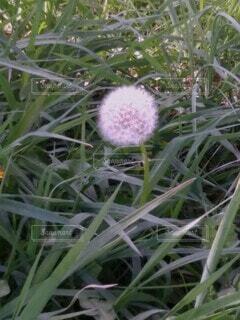 花園のクローズアップの写真・画像素材[4290449]
