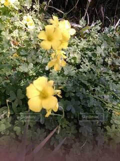 植物の花瓶の写真・画像素材[4332763]