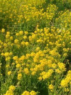 花のクローズアップの写真・画像素材[4332765]
