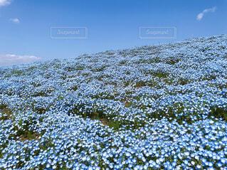 春の写真・画像素材[4333876]