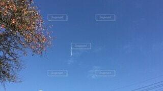空,花,屋外,雲,青い空,樹木