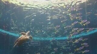 魚,水族館,水面,葉,水中