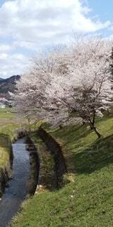 自然,空,花,春,屋外,景色,草,樹木,草木,さくら,ブロッサム