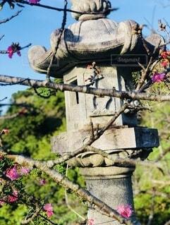 花,春,桜,屋外,樹木,桜の木,石灯籠