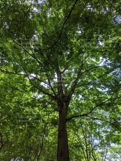 空,屋外,葉,樹木,草木