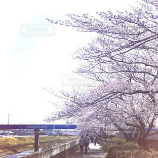 散歩をしながら桜を楽しむ人々の写真・画像素材[4271737]