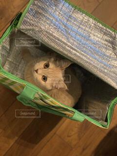 エコバッグに入る猫の写真・画像素材[4367472]