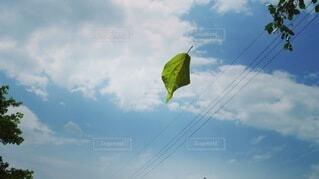 自然,空,雲,木の葉