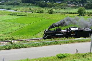 自然,屋外,田舎,草,新緑,機関車,鉄道,蒸気機関車,草木,車両,陸上車両