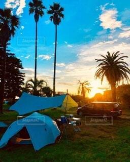 空,夏,夕日,芝生,屋外,雲,夕焼け,草,樹木,キャンプ,ヤシの木,テント,リゾート,千葉,パーム,休暇