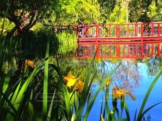 花,屋外,黄色,池,樹木,カラー,草木,赤い橋