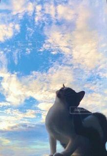 猫,空,動物,屋外,雲