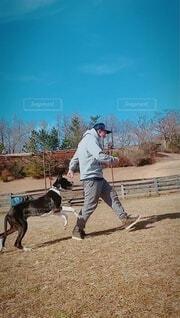 犬,空,動物,屋外,相棒