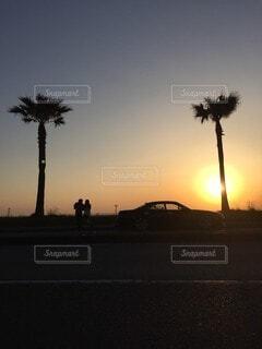 空,屋外,太陽,夕暮れ,樹木,ヤシの木,明るい,草木