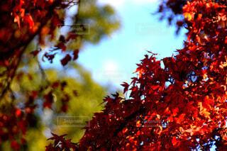 秋,葉,樹木