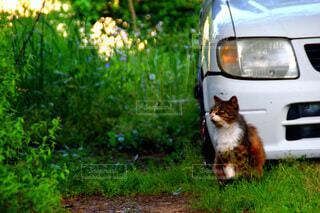 動物,屋外,車,草,樹木,座る