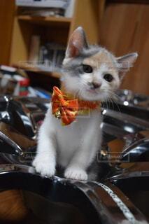 猫,動物,屋内
