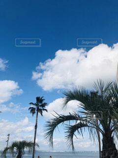 自然,空,屋外,雲,樹木,ヤシの木,草木,パーム