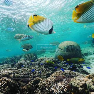 水の中の魚のグループの写真・画像素材[4114684]