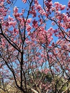 空,花,秋,屋外,葉,樹木,草木,カエデ,支店